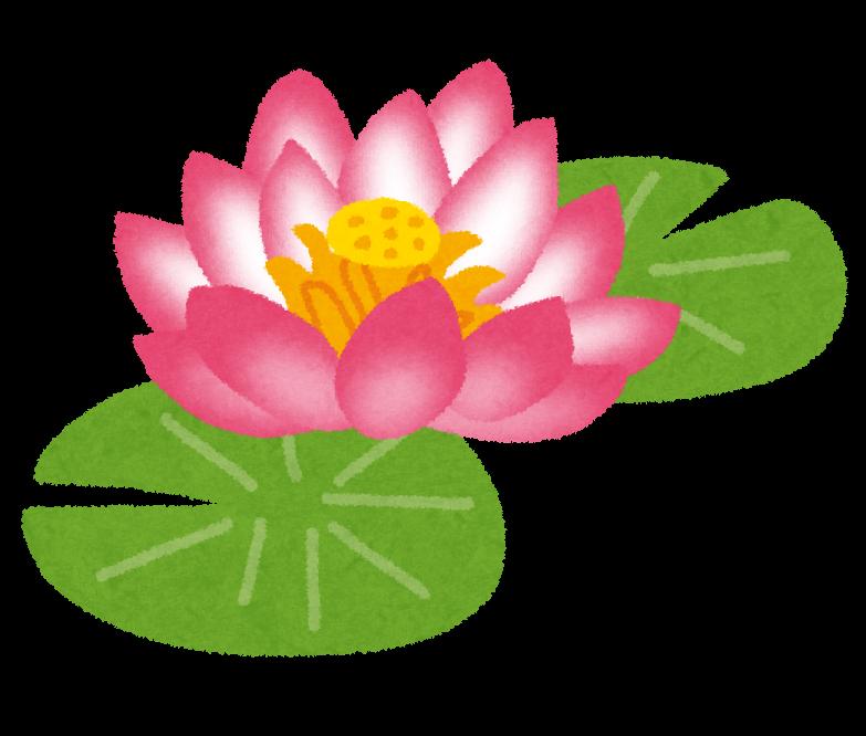 蓮の花 イラスト素材 - iStock