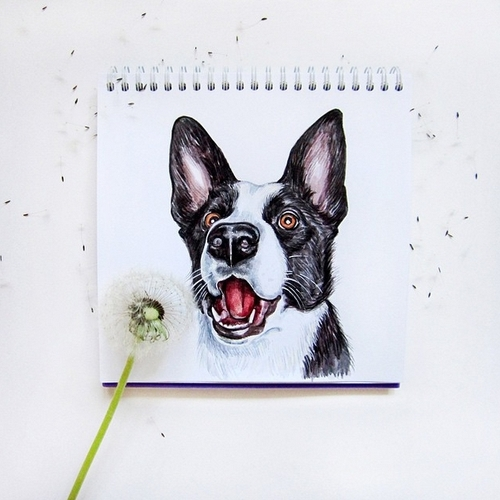 01-1-2-3 Blow-Valerie-Susik-Валерия-Суслопарова-Cats-and-Dogs-Interactive-Animal-Drawings-www-designstack-co