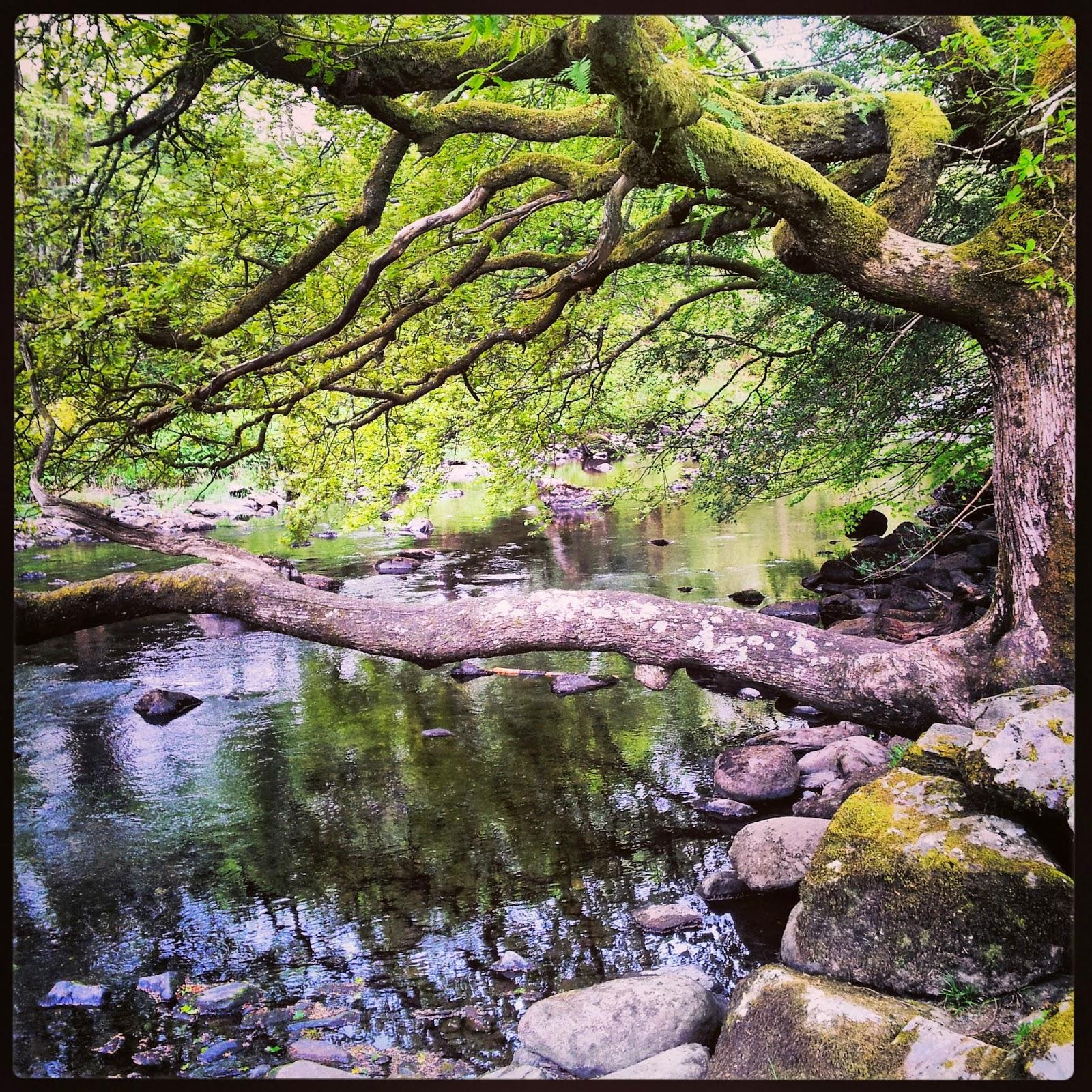 Gwydyr Forest - Black Cat Souvenirs
