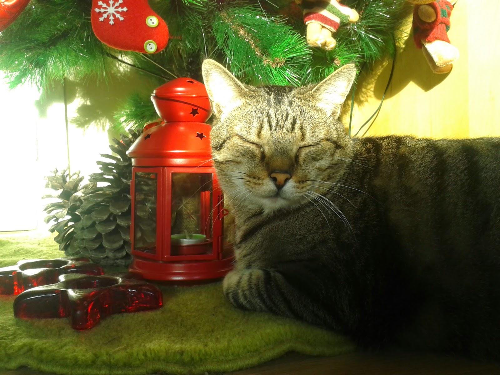 Site qu hay debajo del rbol de navidad - Arbol gato ikea ...