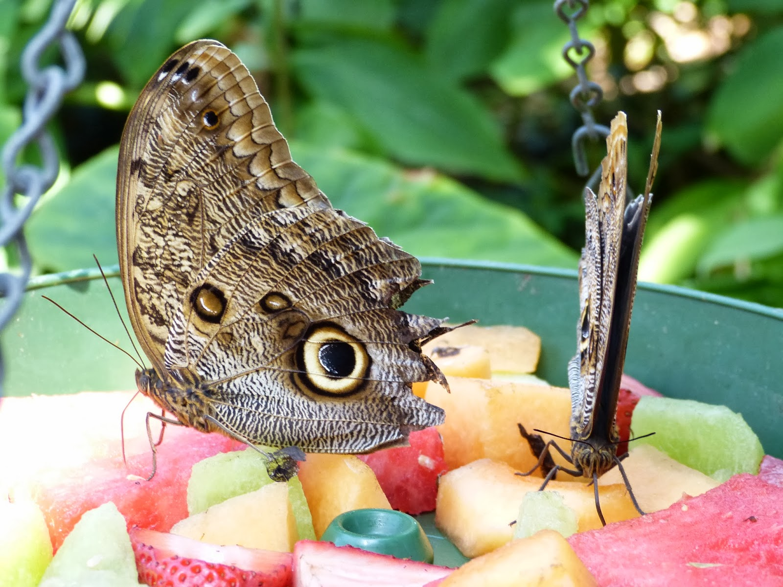 paula u0027s preschool and kindergarten butterflies in the garden