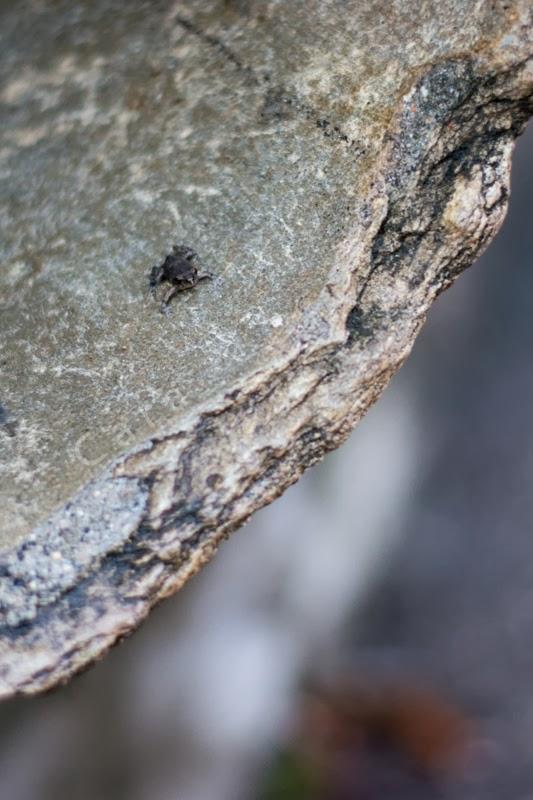 Bébé grenouille ou crapaud dans un tuyau