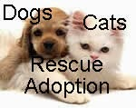New Mexico's Dogs and Cats Adoption / Rescue Options