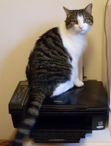 http://2.bp.blogspot.com/-IeXXMPIqqrc/VLwAY7mEqFI/AAAAAAAAcLI/K41eGUK0-us/s500/printing%2Bassistant.jpg