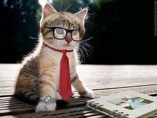 Kucing Percaya diri