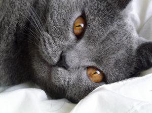 kitty slumber