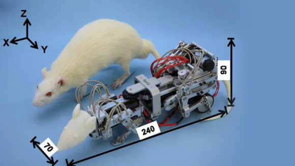Robotic Rat used to stress normal rats