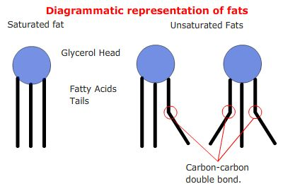 Biology Notes for IGCSE 2014Unsaturated Fats Structure