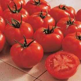http://2.bp.blogspot.com/-IfPBYxXZtHY/Tk60wW-TysI/AAAAAAAAEE8/_6HYurIKzck/s400/tomato+%2527Ferline%2527.jpg