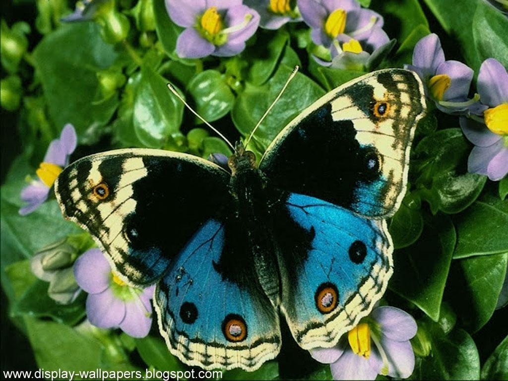 ловить или фотографировать бабочек