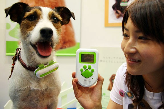 Useful Dog Products and Gadgets (15) 8