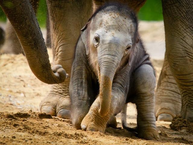 "<img src=""http://2.bp.blogspot.com/-Ifm5atne9Ig/Uq8U40mH3oI/AAAAAAAAFss/x8pX57dTwTk/s1600/gfg.jpeg"" alt=""elephant animal wallpapers"" />"