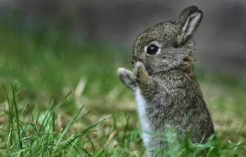 Tiny Baby Rabbit