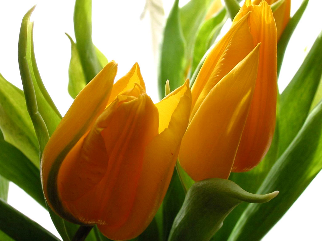 Beautiful beautiful flowers beautiful flowers izmirmasajfo