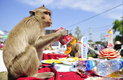 funny_picture_funny_monkey_drinking_pepsi_vandanasanju.blogspot.com
