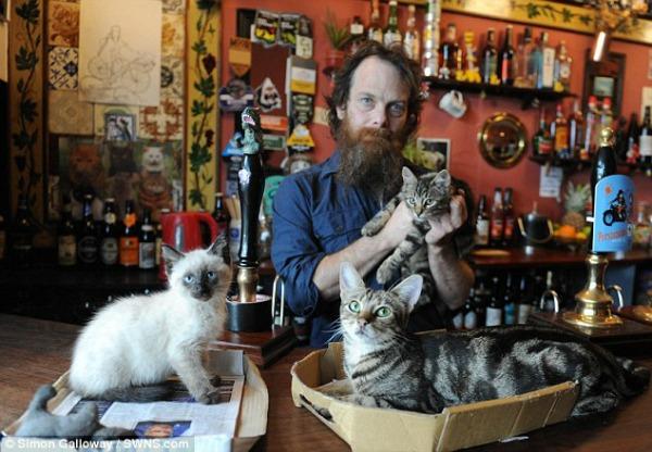 cats in pub