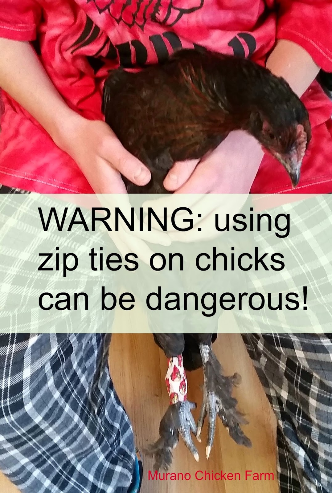 A warning about using zip ties on chicks leg