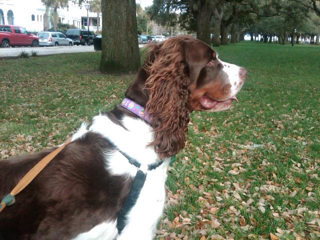 Charleston Dog Walking Co
