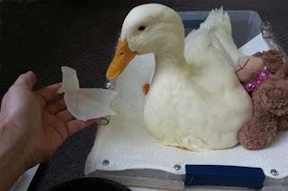 Aquateknica le ofrece equipos de impresión 3D que ya se utilizan en veterinaria