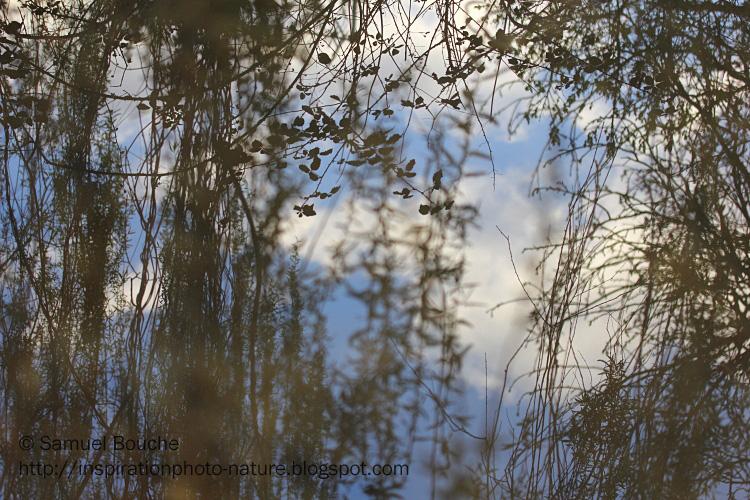 reflet des arbres dans l'eau