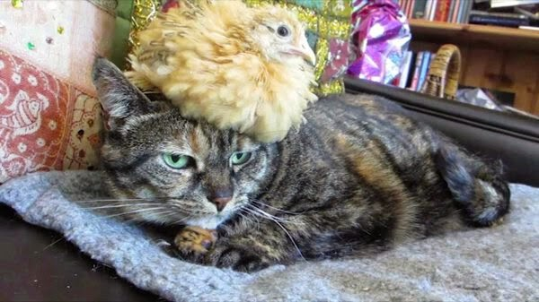 Funny animals of the week - 26 September 2014 (40 pics), animal photos