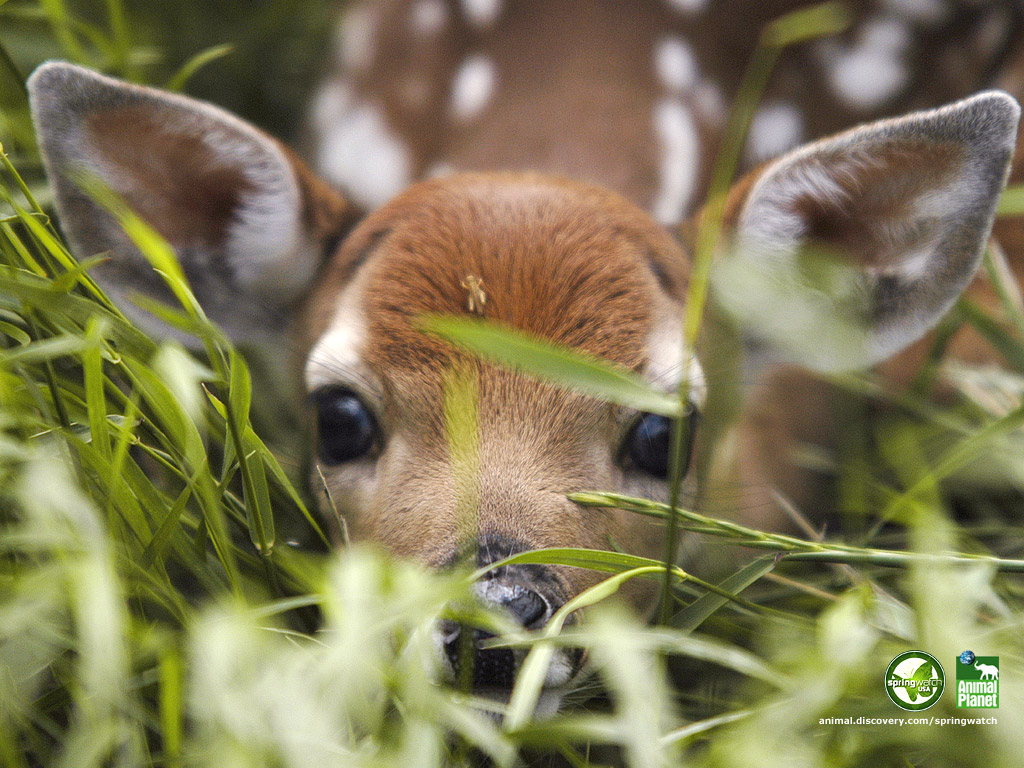 spring animal wallpapers: Welcome To Animal Cognizance: Spring Brings Baby Animals A