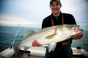 "35"" Striped Bass"