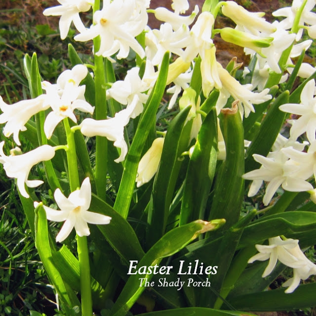 Easter Lilies at The Shady Porch