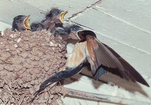 Leckaun National School: Swallow's Nest