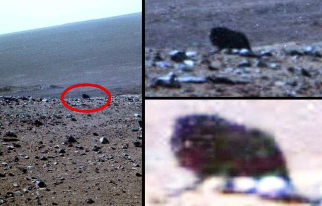 Possible four-legged dark creature caught on camera by ...