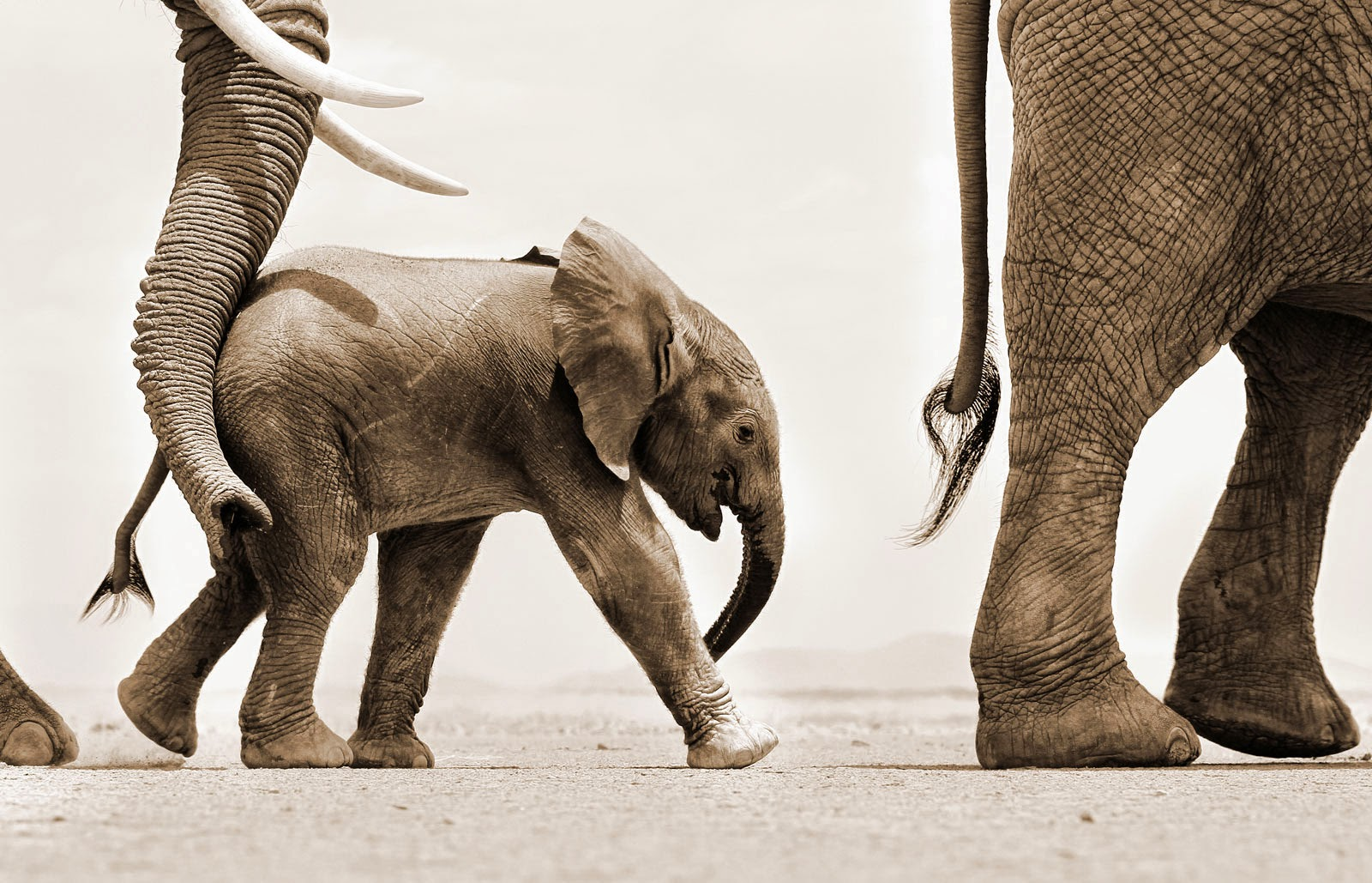 http://magazine.africageographic.com/weekly/issue-6/world-elephant-day-gallery/