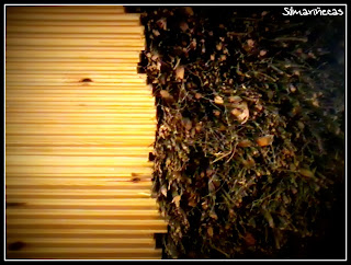 El bosque: Mucho más que madera-