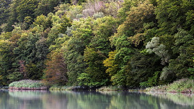 Image of the forest along Rhône river near Arcine.
