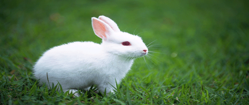 Amazing Rabbit