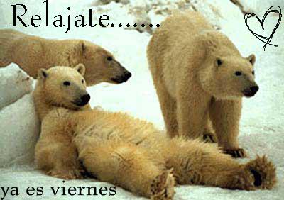 imagenes graciosas de  viernes en osos