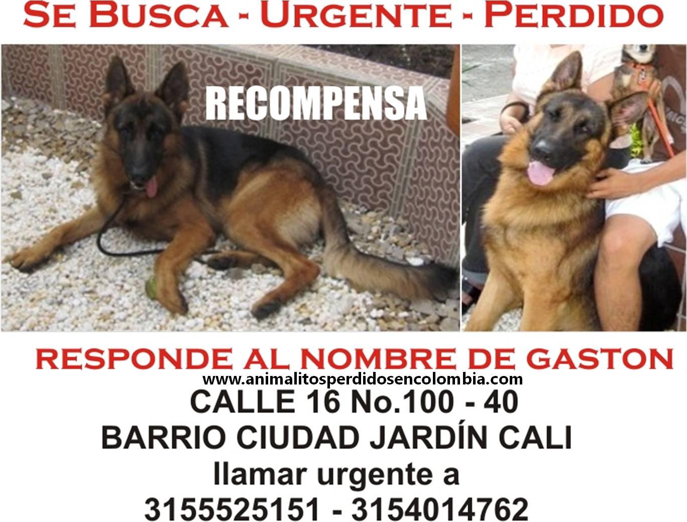 Animalitos perdidos en colombia enero 2012 for Barrio ciudad jardin cali