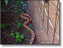 Picture of snake