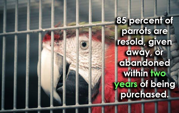 Stop parrots trade