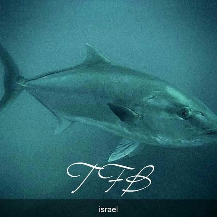 בלוג הדייג של טרולוס-Trolos fishing blog-TFB