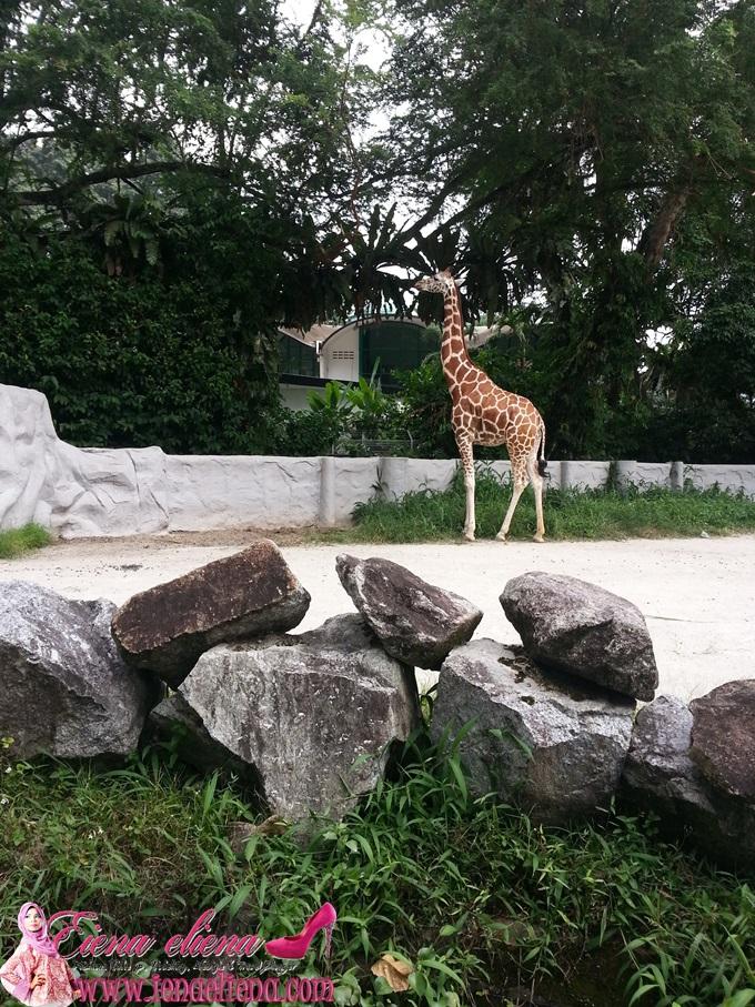 Savanah Walk Zoo Negara