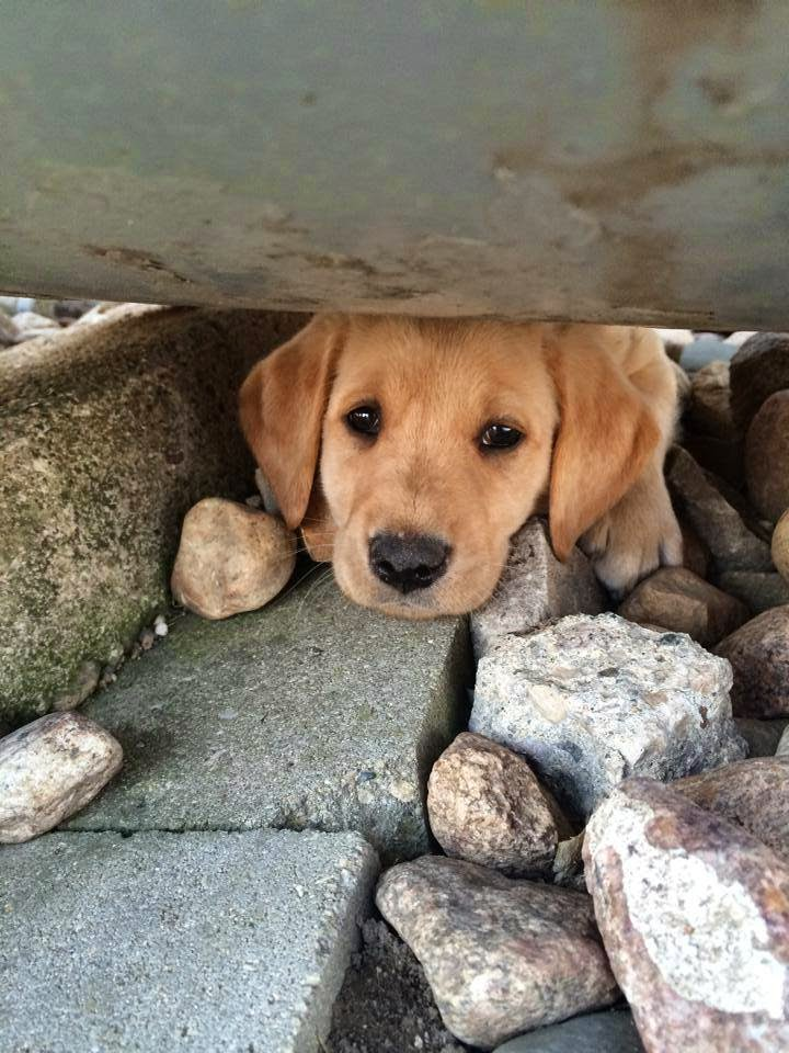Cute dogs - part 23 (50 pics), funny dog pictures, dog photos