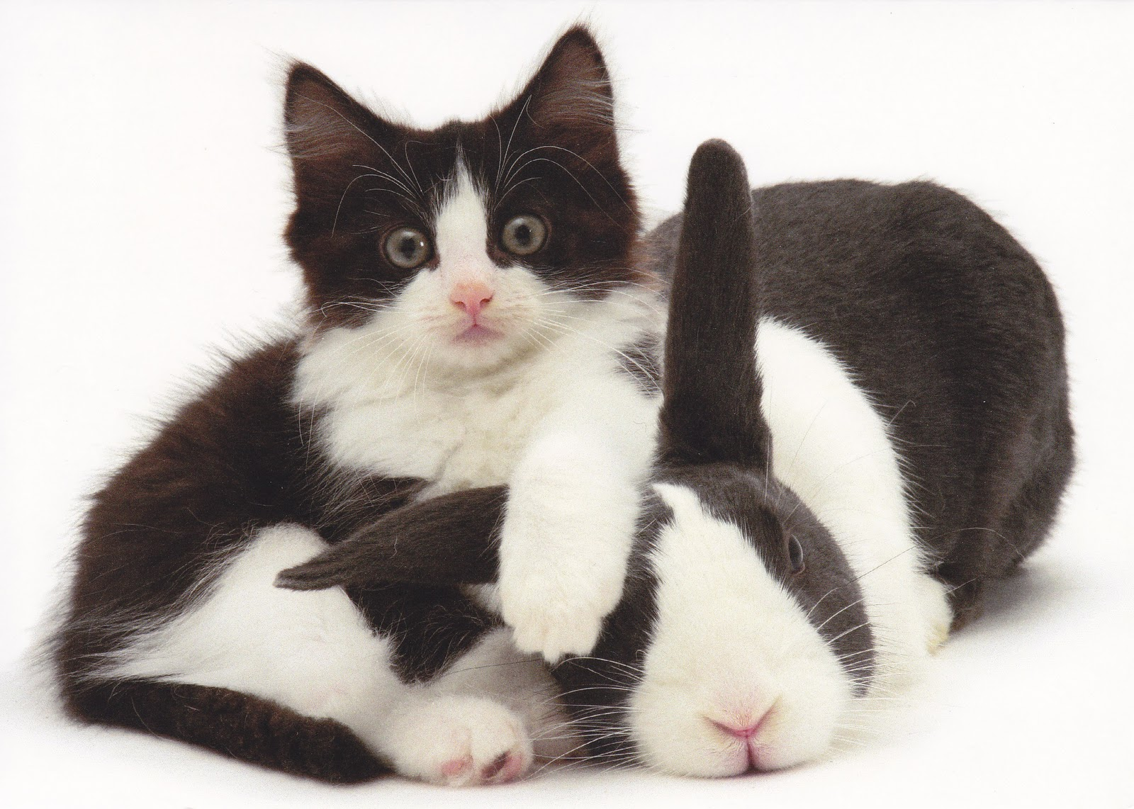 rabbit ramblings matching bunny and cat