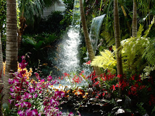 Singapore Orchids at Chelsea Flower Show