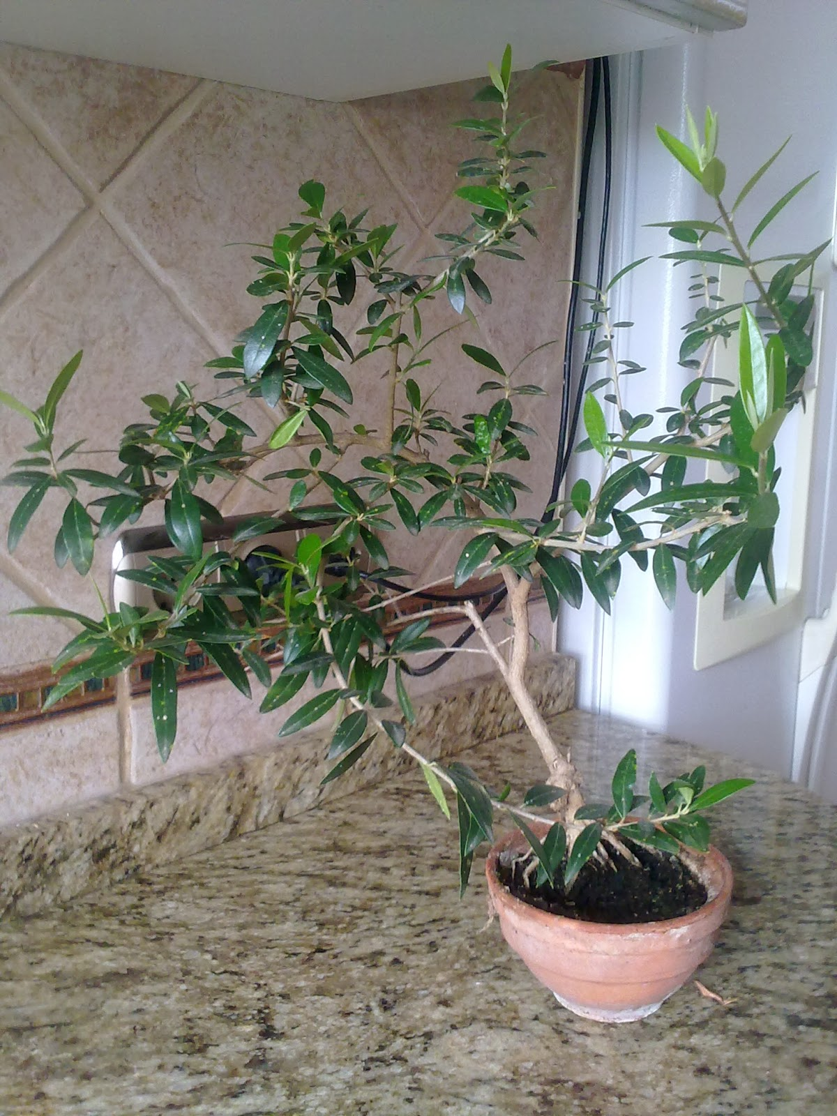 Entre patios y plantas que plantas poner en el interior - Plantas decorativas de interior ...