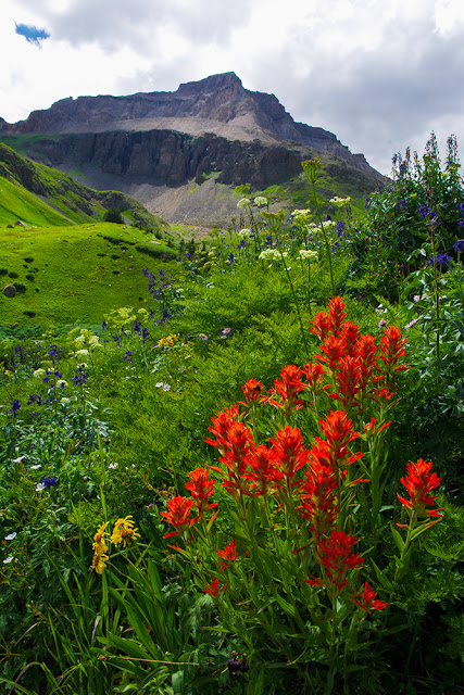 Gilpin Peak and wildflowers from Yankee Boy Basin in the San Juan range, Colorado