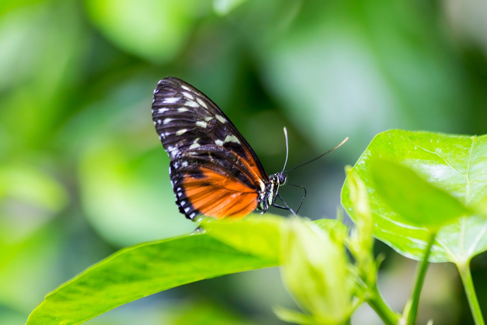 Victoria Butterfly Gardens Part 3 Central Saanich Bc