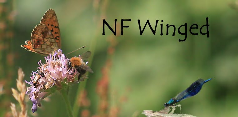 NF Winged