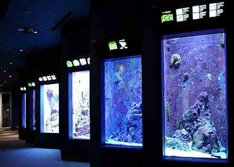 Coral Galery, Churaumi Aquarium