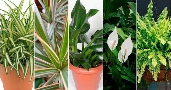 Papo verde plantas dentro de casa papo de design for Plantas para interiores feng shui