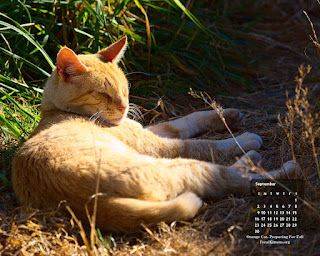 September Cat 1280, click on image for full size, right-click to save as wallpaper